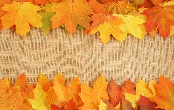 Picture autumn, leaves, bright colors, veins