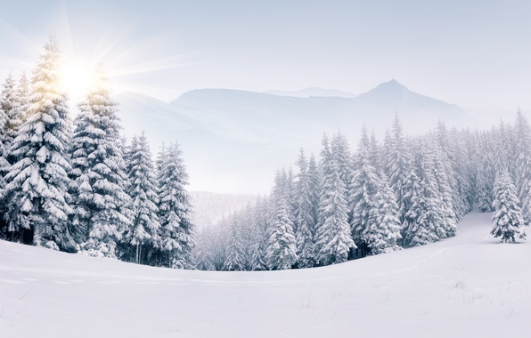 Picture winter, snow, tree, landscape, winter, snow