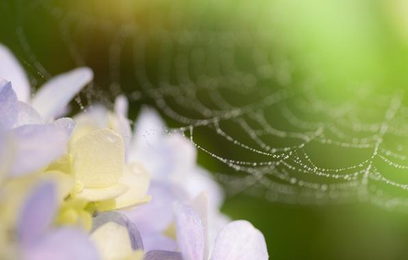 Picture flower, drops, macro, photo, web
