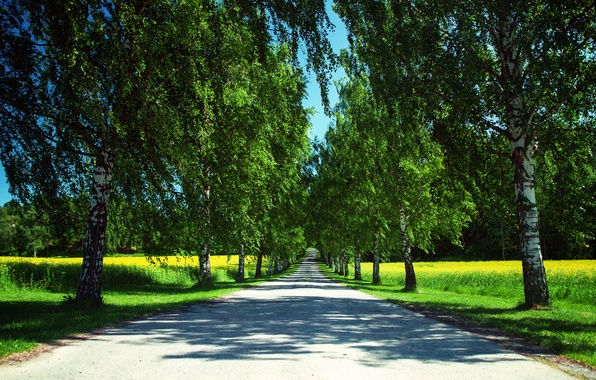 Picture road, summer, the sky, trees, nature, field, Norway, shadows, birch, rape
