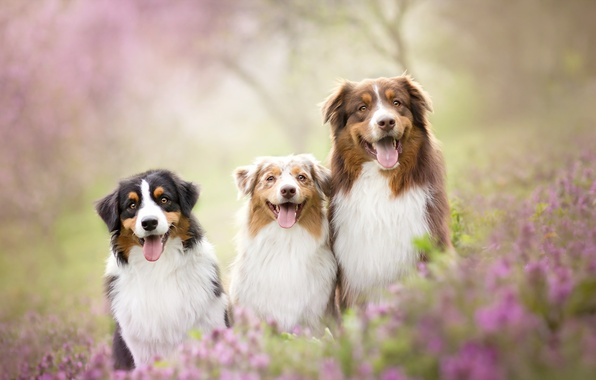 Picture dogs, summer, friends