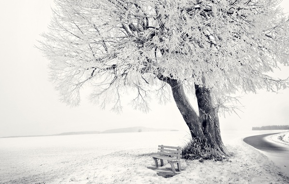 Picture winter, road, forest, snow, landscape, bench, nature, tree, Wallpaper, horizon, frost, shop, 1920x1080