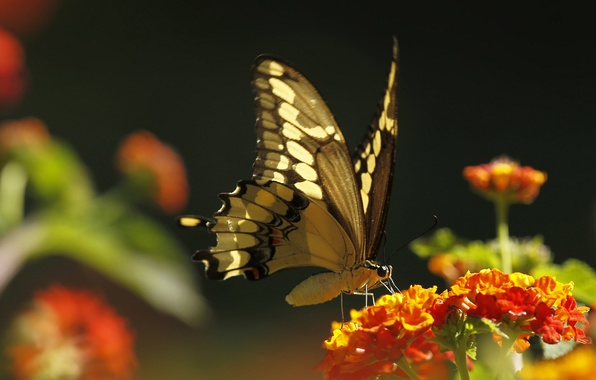 Picture flower, macro, butterfly, plant, insect, moth