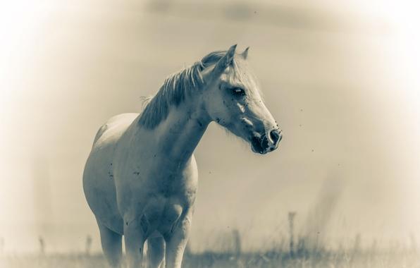 Wallpaper Summer, Nature, Horse Images For Desktop