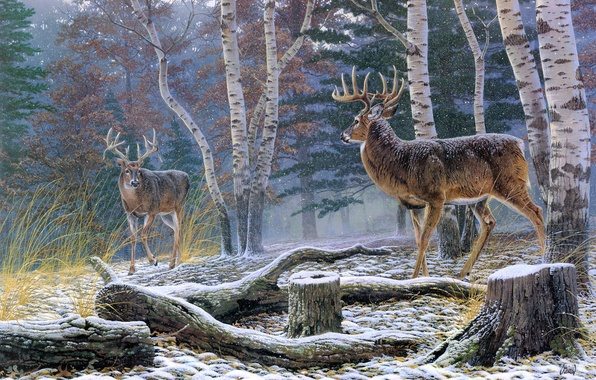 Picture autumn, forest, animals, stump, the opposition, birch, painting, deer, Al Agnew, the first snow, Confrontation