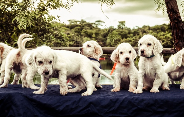Picture dogs, puppies, friends