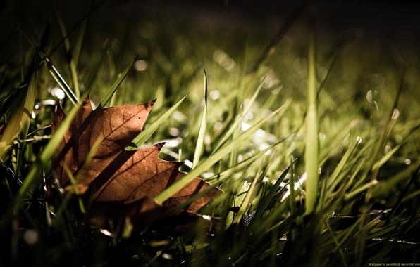 Picture Leaf, Grass, Autumn, Fall, Grass