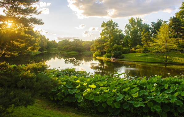 Picture greens, the sky, grass, the sun, clouds, trees, pond, Park, USA, the bushes, Missouri Botanical ...