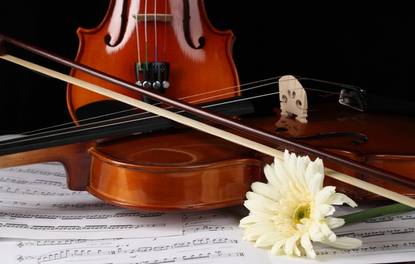 Picture flower, notes, violin, gerbera