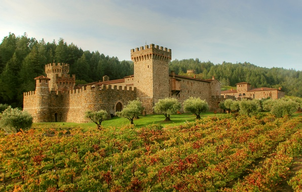 Picture field, forest, grass, trees, castle, Italy, fortress, plantation, Tuscany, Castello di Amorosa