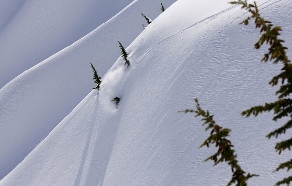 Picture winter, snow, mountains, snowboard, the descent, tree, speed, adrenaline, snowboarder