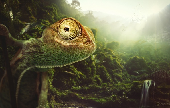 Picture nature, chameleon, animal, desktopography, chameleon