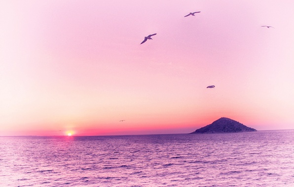 Picture sea, birds, pink, dawn, island