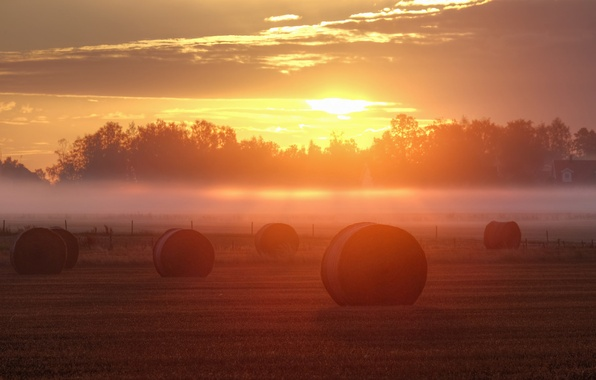 Picture fog, sunrise, the fence, field, hay, farm