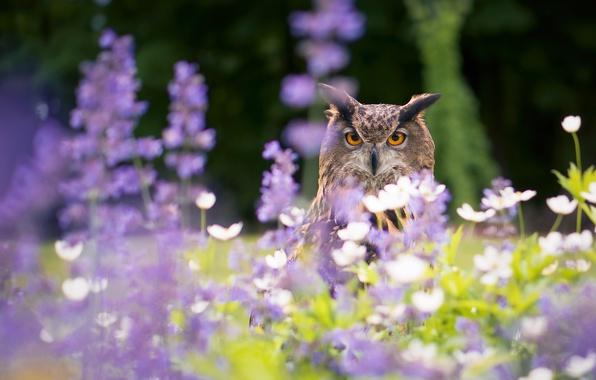 Picture flowers, owl, bird, bokeh, owl, Virgin Filin