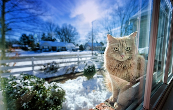 Picture winter, cat, light, window, Gregory J Scott Photography