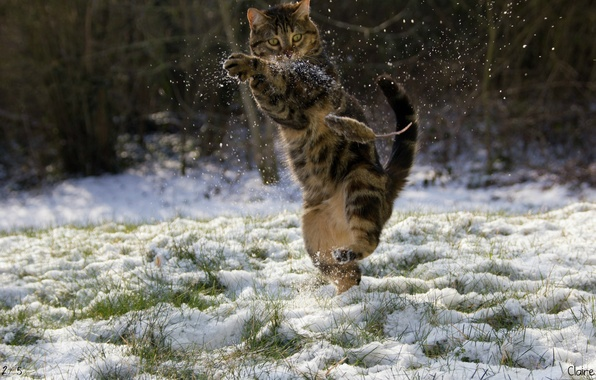 Picture winter, cat, snow, mouse, Kung fu
