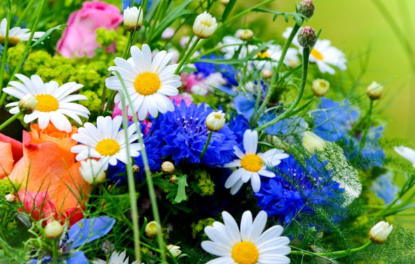 Picture roses, chamomile, bouquet, cornflowers