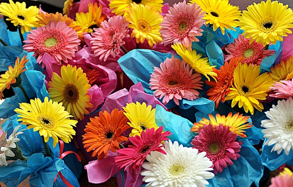 Picture paint, bouquet, petals, gerbera