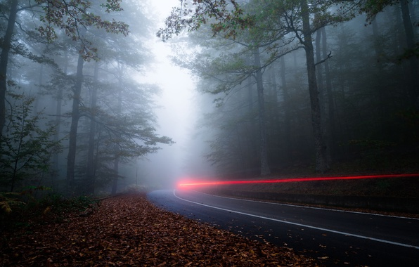 Picture road, forest, light, nature, fog, the evening, excerpt, haze