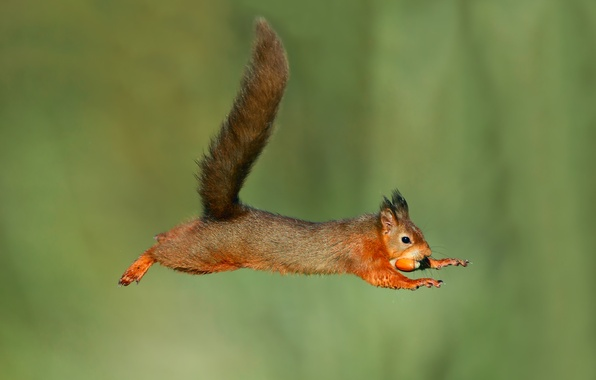 Picture background, jump, wet, protein, flight, acorn