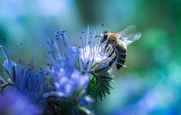 Picture flower, nature, bee