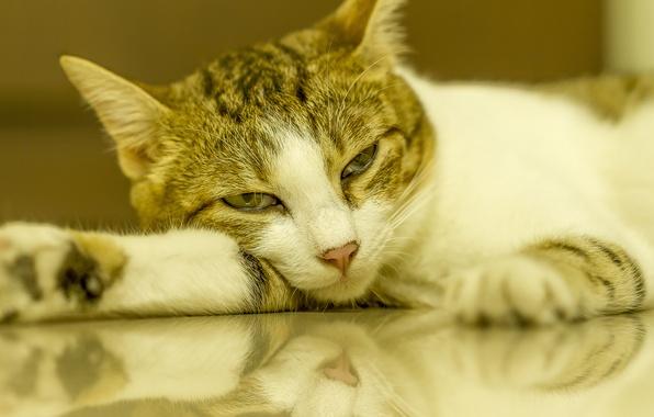 Picture cat, reflection, Nega