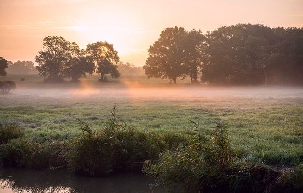 Picture grass, the sun, rays, light, trees, fog, Rosa, river, spring, morning, reed, the sun
