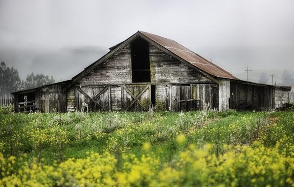 Picture landscape, nature, house, plants, garden, abandoned, building