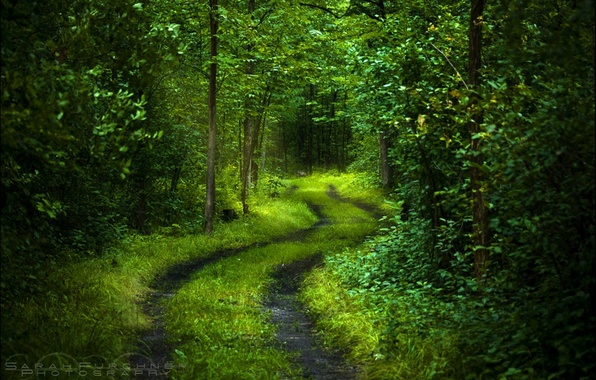 Picture road, forest, light, trees, freshness, nature, green, mood, foliage, calm, mysterious