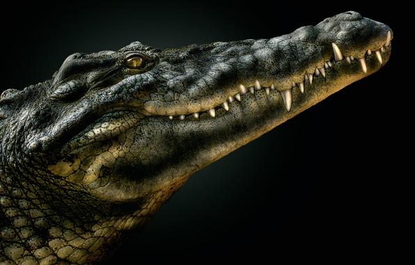 Picture crocodile, mouth, alligator