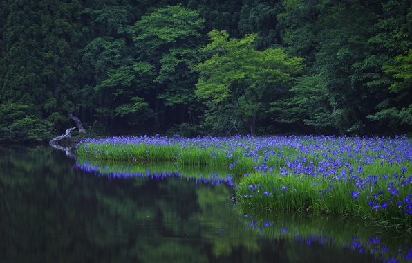Picture grass, water, trees, flowers, nature, Park, reflection, green, green, grass, trees, nature, water, park, flowers, …