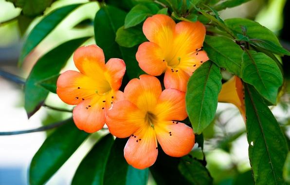 Picture Flowers, Plant, Petals, Oranzhevye Florets, Flowers