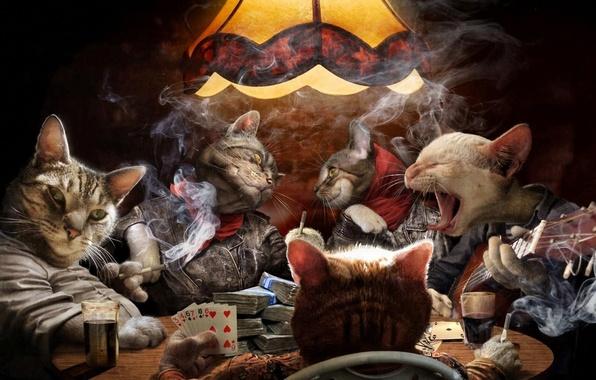 Picture card, cats, smoke, guitar, money, cigarette