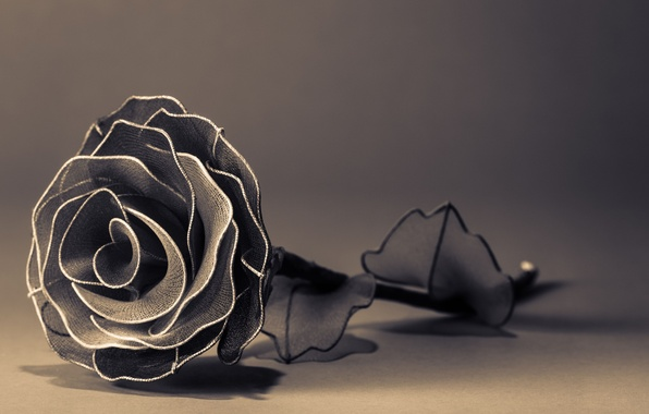 Picture flowers, background, widescreen, black and white, Wallpaper, rose, petals, wallpaper, widescreen, background, full screen, HD …