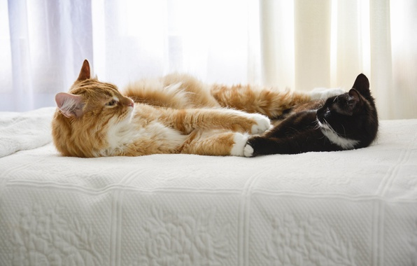 Picture cats, bed, friends, looking each other