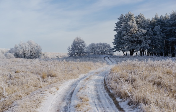 Picture winter, frost, road, field