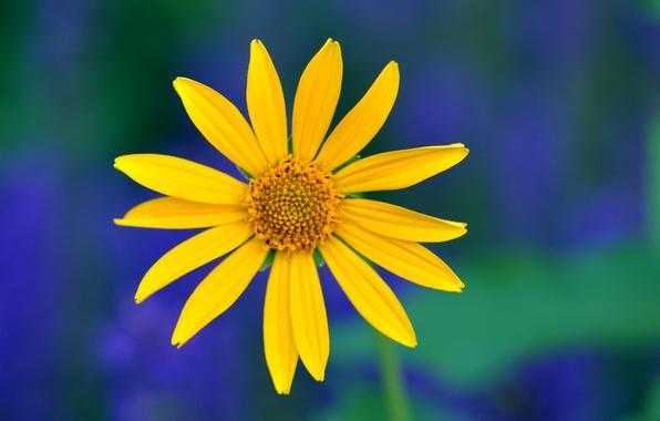 Picture flower, macro, blue, green, background, Yellow, petals