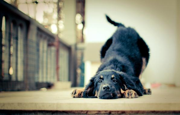 Picture devotion, friendship, puppy