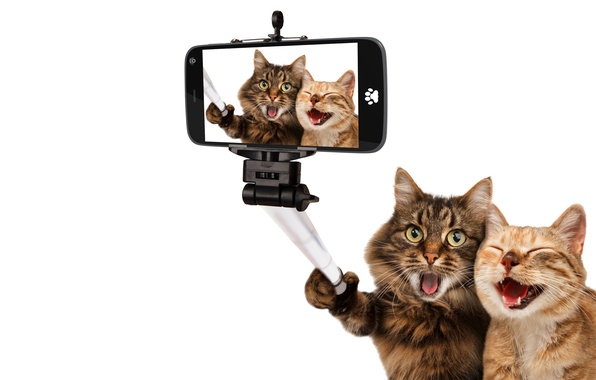 Picture cats, joy, photo, cats, humor, white background, the, smartphone