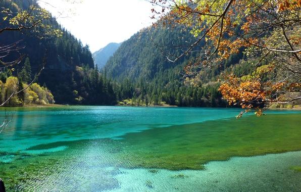 Picture autumn, forest, leaves, trees, mountains, branches, lake, Park, China, Jiuzhaigou National Park
