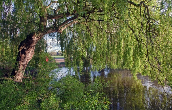 Picture tree, England, river, IVA