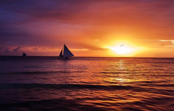 Picture sea, wave, the sky, the sun, landscape, sunset, clouds, nature, mood, sailboat, Seagull, calm