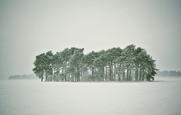 Picture winter, forest, snow, trees, Blizzard, snowy