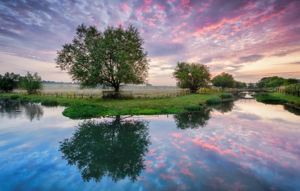 Picture field, summer, trees, bridge, river, dawn, morning