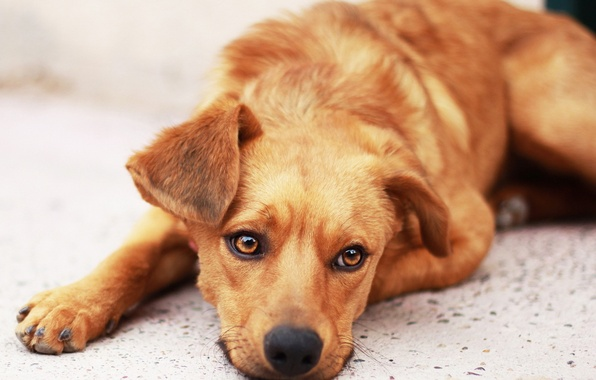 Picture sadness, hope, dog, waiting