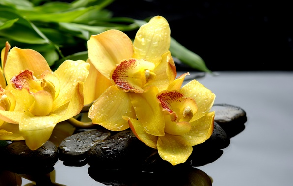 Picture drops, macro, reflection, stones, yellow, orchids, black, orchids