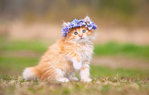 Picture flowers, fluffy, baby, kitty, wreath