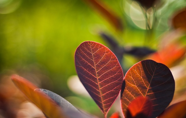Picture leaves, color, macro, nature, photo, background, Wallpaper, bright, plants