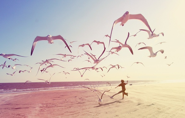 Picture sea, beach, people, animal, Seagull, boy, beach, sea, people, boy, animal, seagull